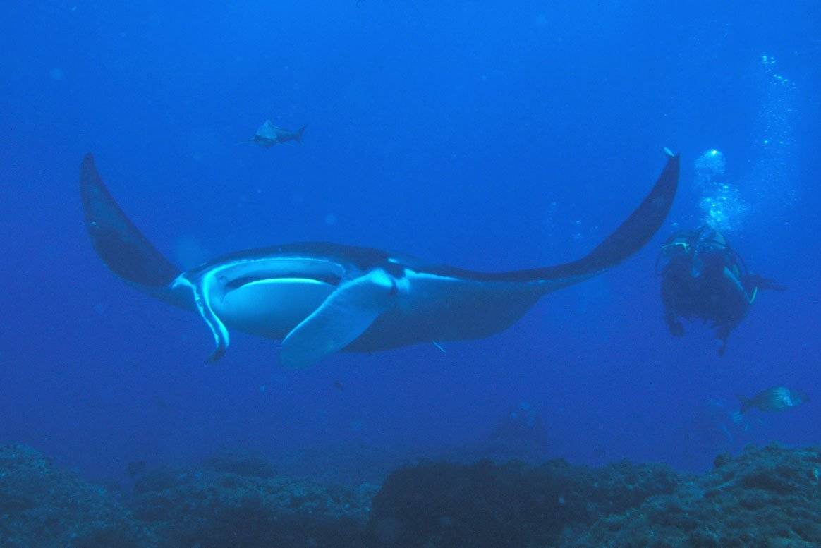 Scuba diving in the philippines top 10 dive sites - Dive in scuba ...