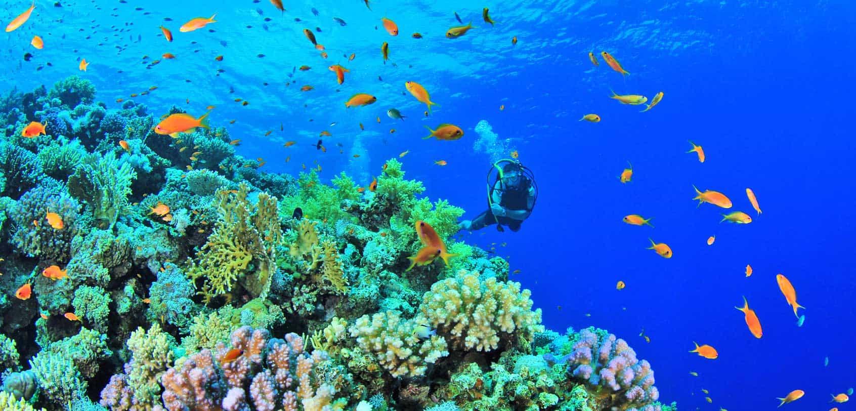 Imagini pentru scuba diving